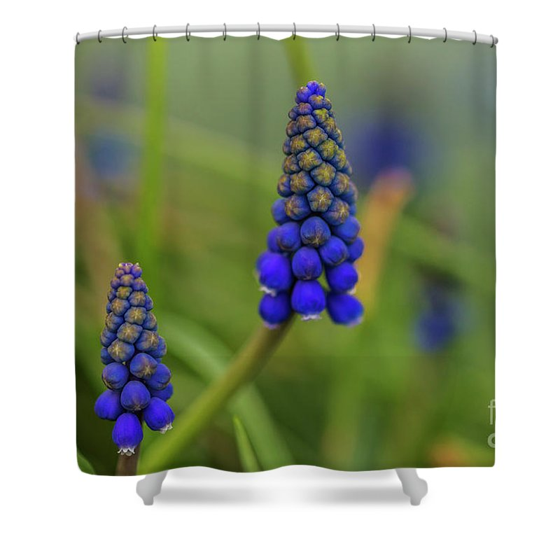Lupine Leaves Lupine Leaf Shower Curtain featuring the photograph Flowers by Tino Lehmann