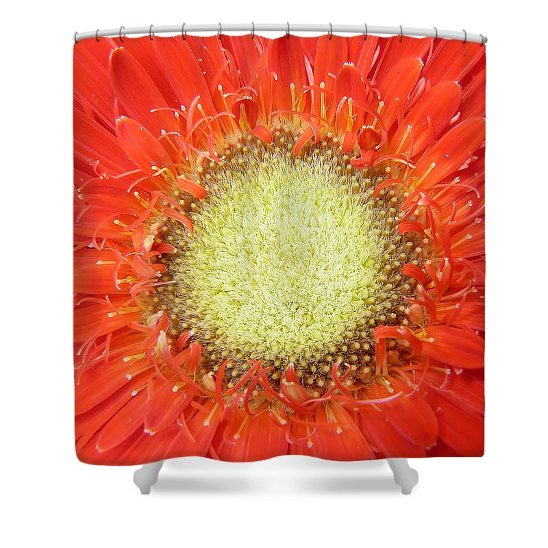 Gerbera Shower Curtain featuring the photograph Gerbera by Daniel Csoka
