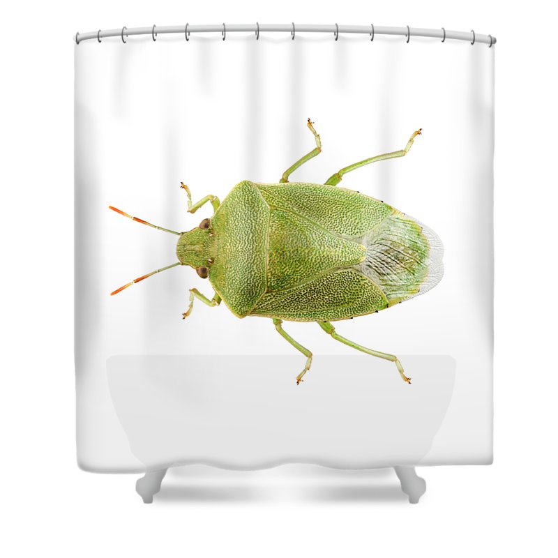 Antennae Shower Curtain Featuring The Painting Green Shield Bug Species Palomena Prasina By Pablo Romero