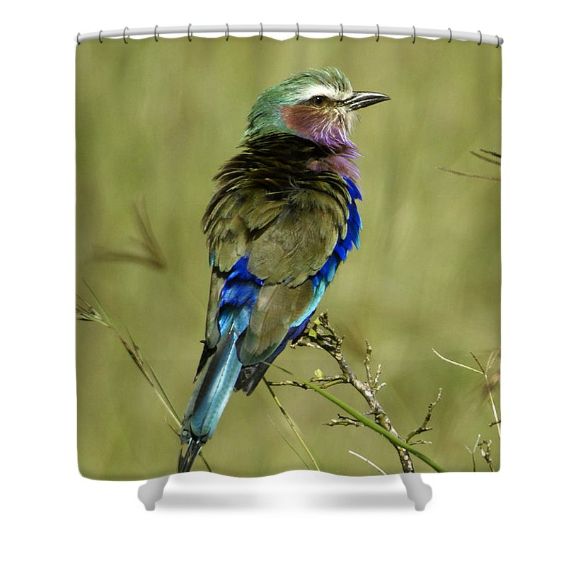 Africa Shower Curtain featuring the photograph Lilac-breasted Roller by Michele Burgess