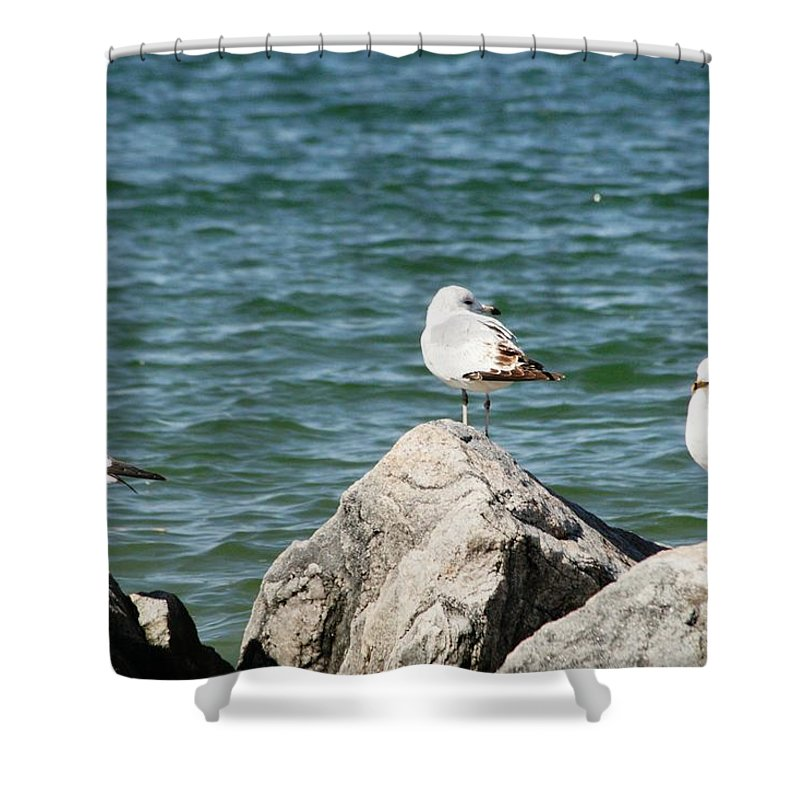 Sea Shower Curtain featuring the photograph 3 Of Them At Sea by Paul SEQUENCE Ferguson       sequence dot net