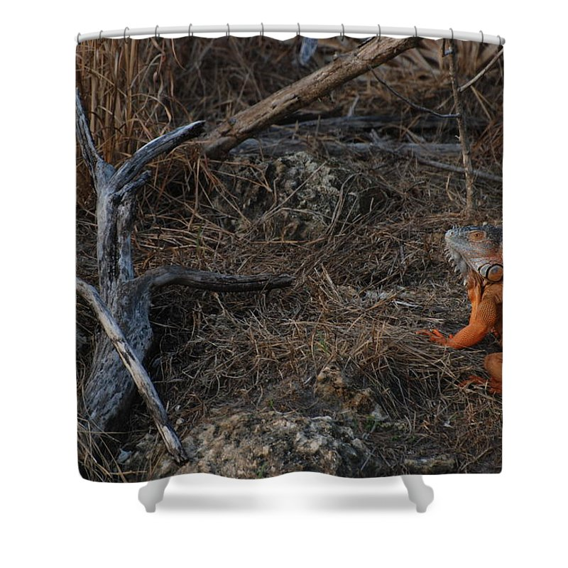 Branches Shower Curtain featuring the photograph Orange Iguana by Rob Hans