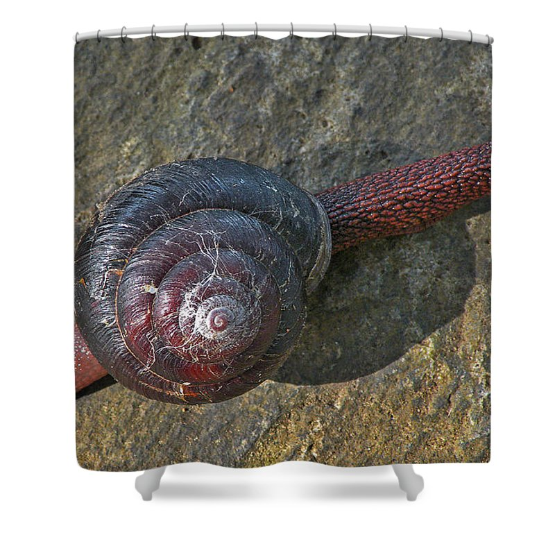 Snail Shower Curtain featuring the photograph Oregon Snail by Lindy Pollard