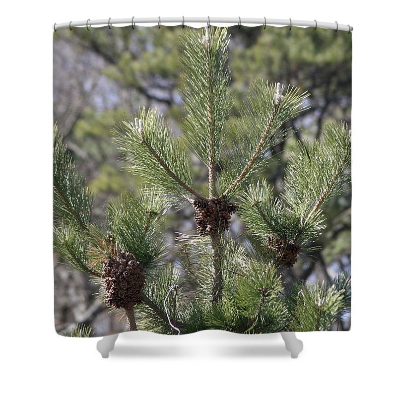 Christmas Shower Curtain featuring the photograph 3 by Paul SEQUENCE Ferguson       sequence dot net