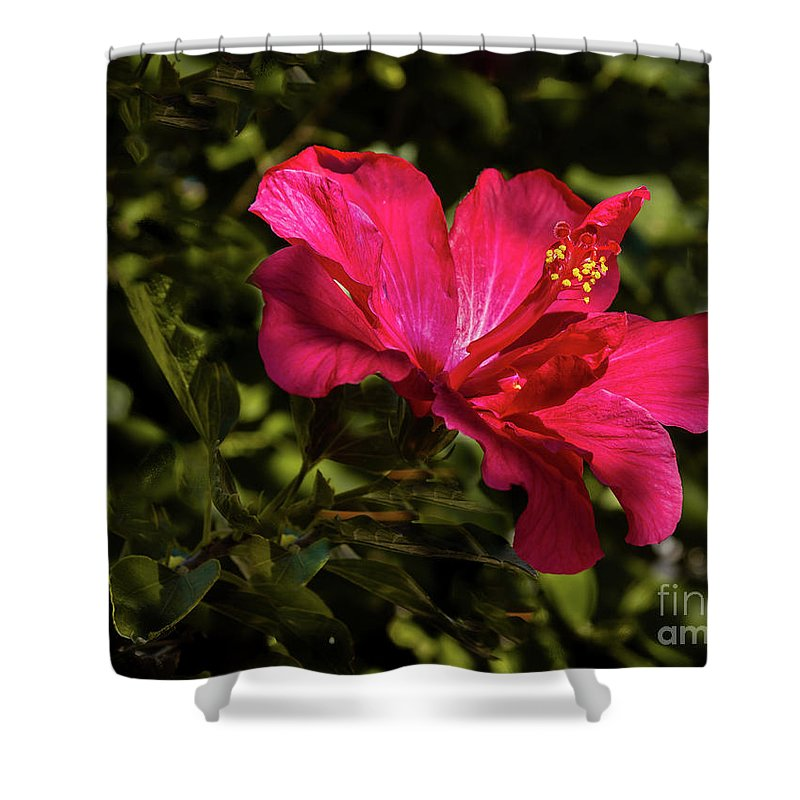 Hibiscus Shower Curtain featuring the photograph Red Hibiscus by Robert Bales