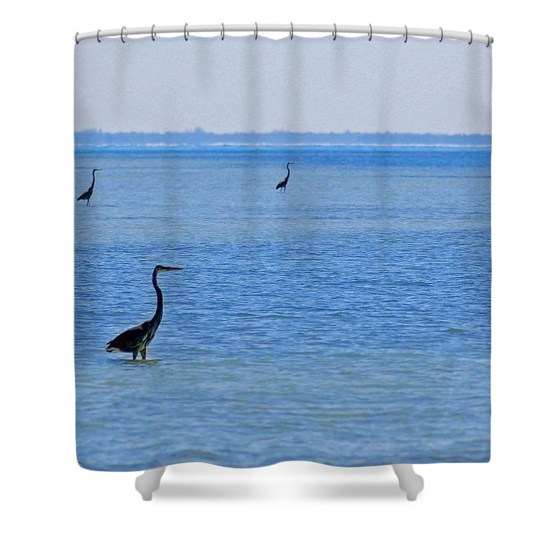 Pelican Shower Curtain featuring the photograph 3 Times by Michael Thomas