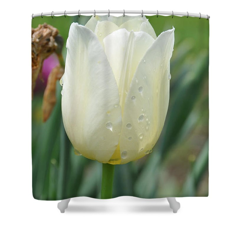 Tulip Shower Curtain featuring the photograph Tulip 2 by Rich Bodane