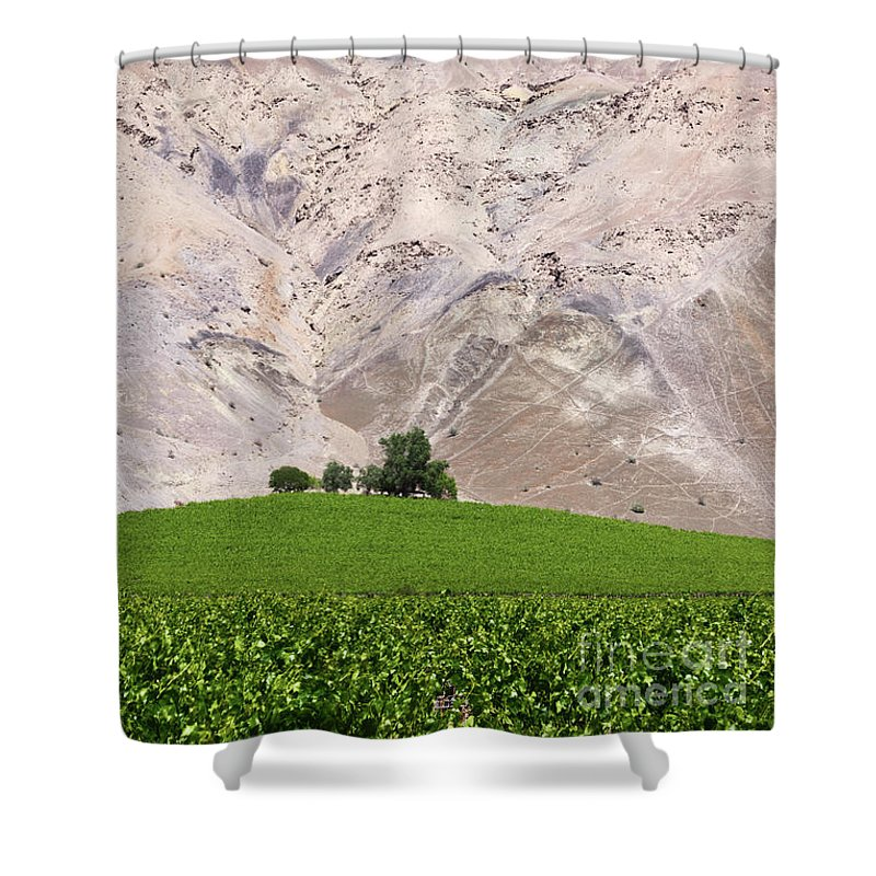 Chile Shower Curtain featuring the photograph Vines In The Atacama Desert Chile by James Brunker