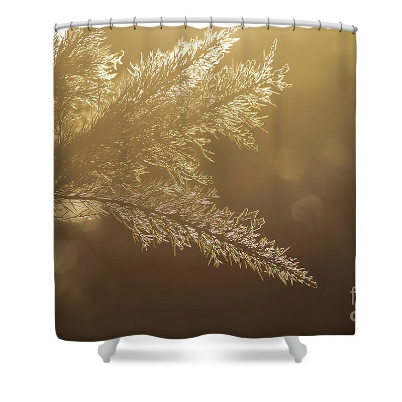 Nature Shower Curtain featuring the photograph Australian Bush by Mikael Fahlesson