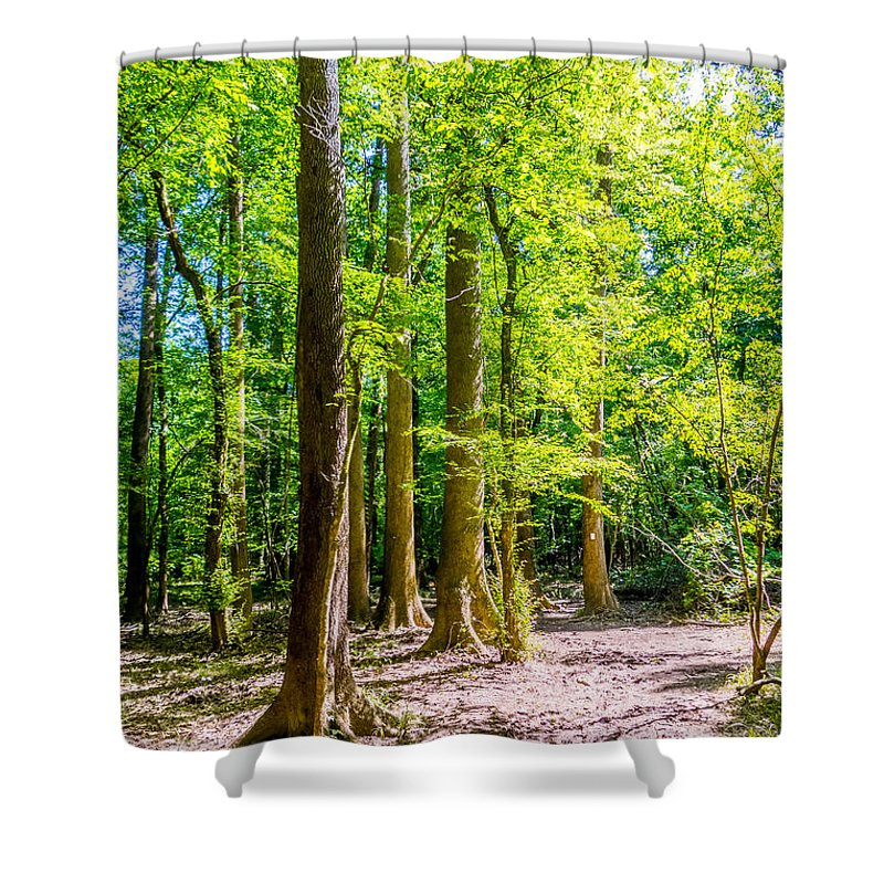 Broken Shower Curtain featuring the photograph cypress forest and swamp of Congaree National Park in South Caro by Alex Grichenko