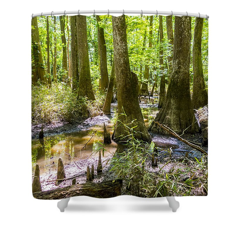 Carolina Shower Curtain featuring the photograph cypress forest and swamp of Congaree National Park in South Caro by Alex Grichenko