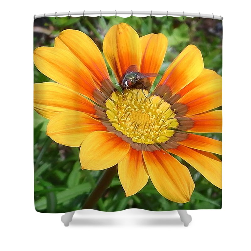 Australia Shower Curtain featuring the photograph Australia - Fly Feeding On Pollen by Jeffrey Shaw
