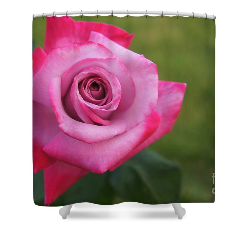 Shower Curtain featuring the photograph Flower Series by Rebecca Sanders