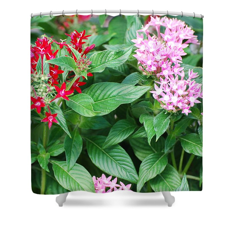 Flowers Shower Curtain featuring the photograph Flowers by Rob Hans