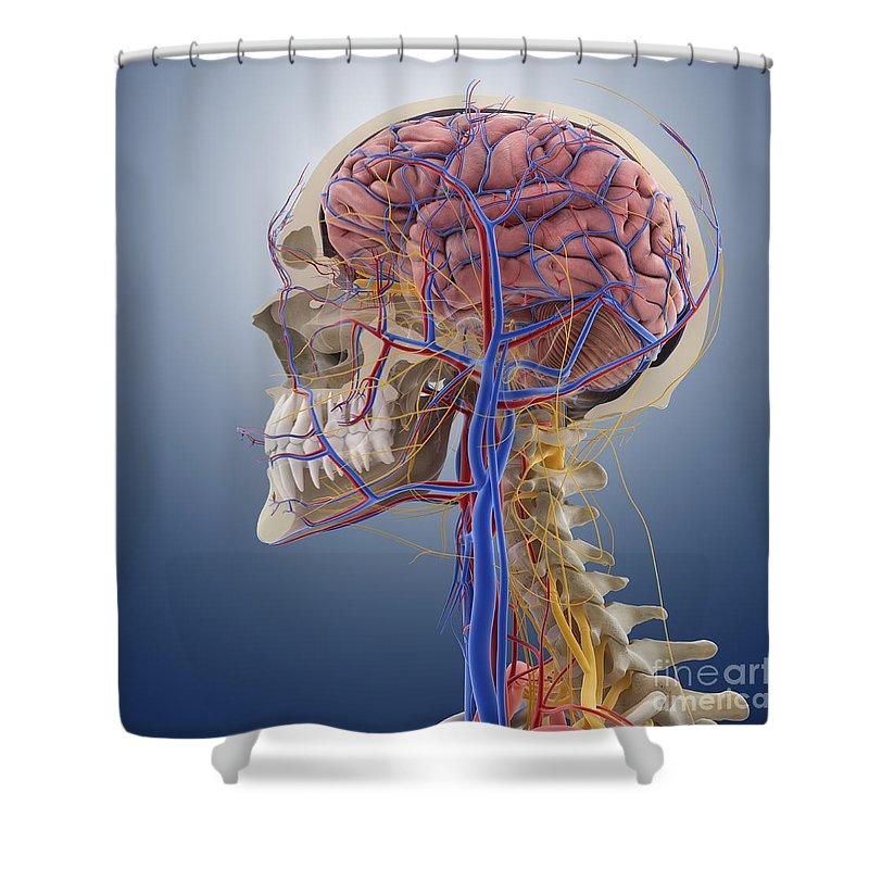 Increíble Sea Monkey Anatomía Galería - Imágenes de Anatomía Humana ...