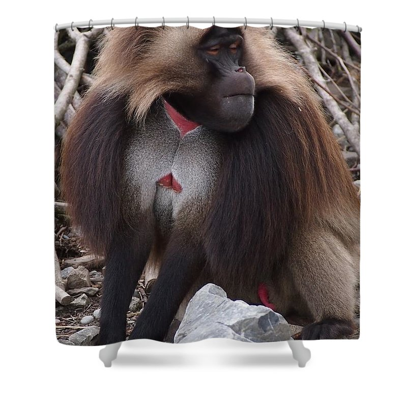 Baboon Shower Curtain featuring the photograph Monkey by FL collection
