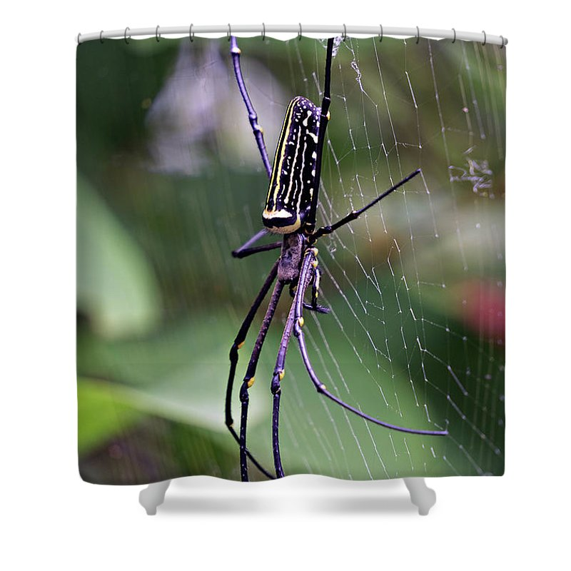 Spider Shower Curtain featuring the photograph Spider by Lik Batonboot