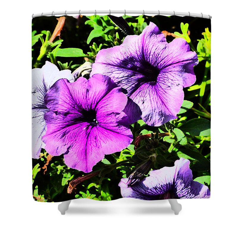 Idaho Spring Flowers Gardens Floral Paul Stanner Shower Curtain featuring the photograph Caravan Of Dreams by Paul Stanner