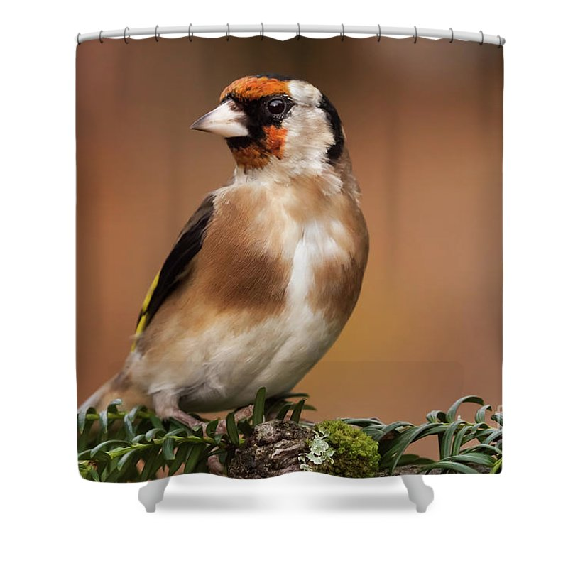 Goldfinch Shower Curtain featuring the photograph European Goldfinch Bird Close Up  by Simon Bratt Photography LRPS