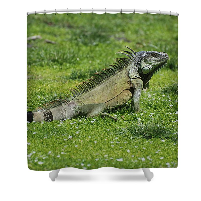 Macro Shower Curtain featuring the photograph I Iguana by Rob Hans
