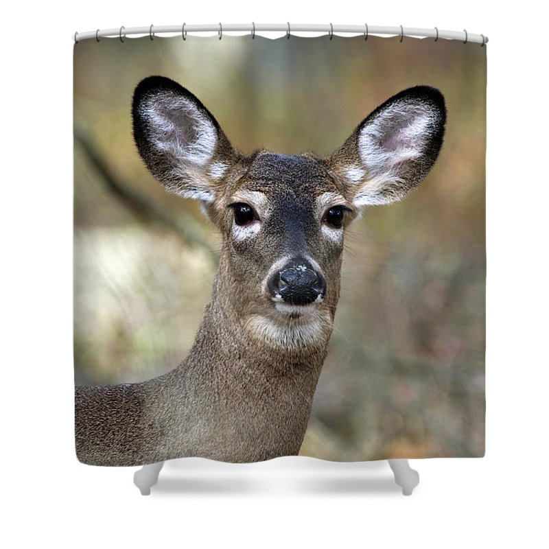 White Tail Deer Shower Curtain featuring the photograph White Tailed Deer Smithtown New York by Bob Savage