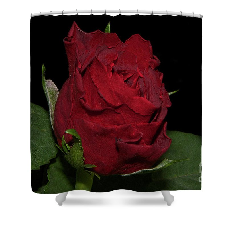 Flowers Shower Curtain featuring the photograph Red Rose by Elvira Ladocki