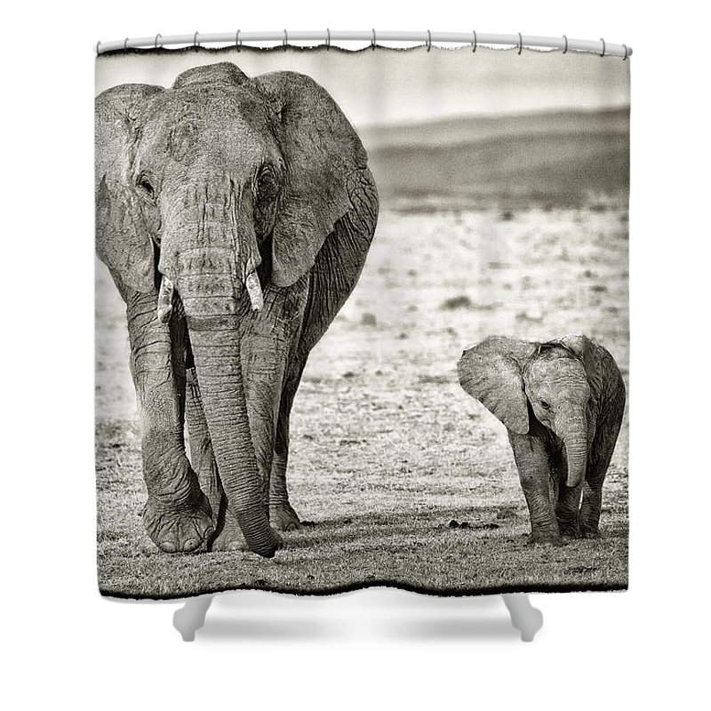 Africa Shower Curtain featuring the photograph African Elephant In The Masai Mara by Perla Copernik