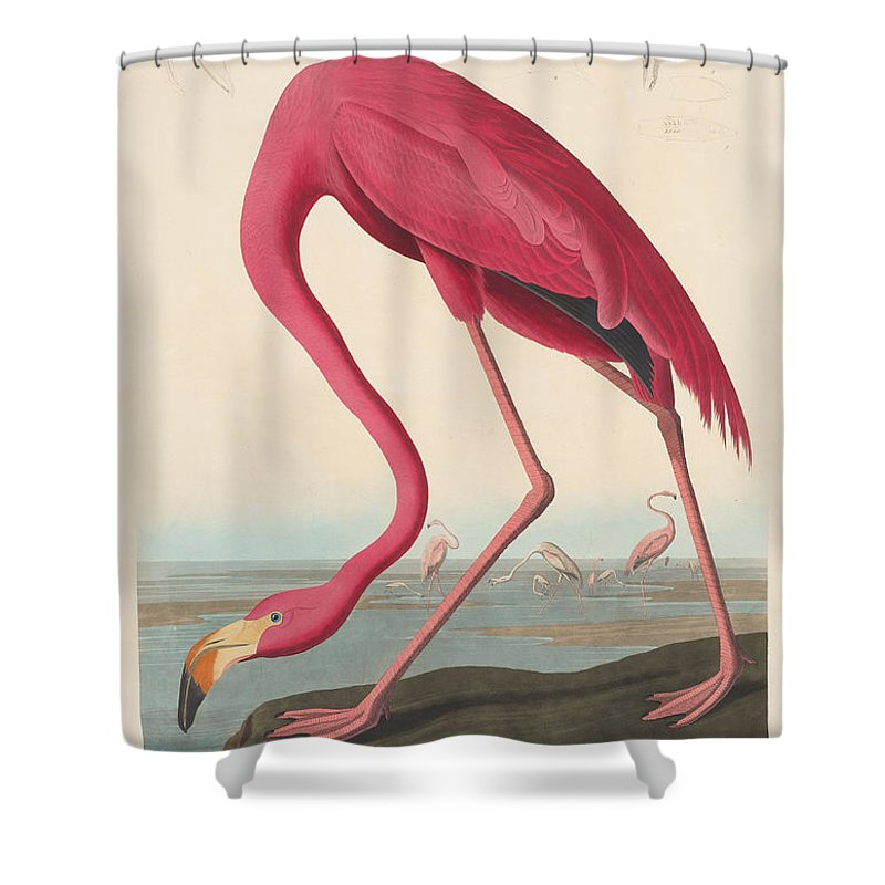 John James Audubon Shower Curtain Featuring The Painting American Flamingo By