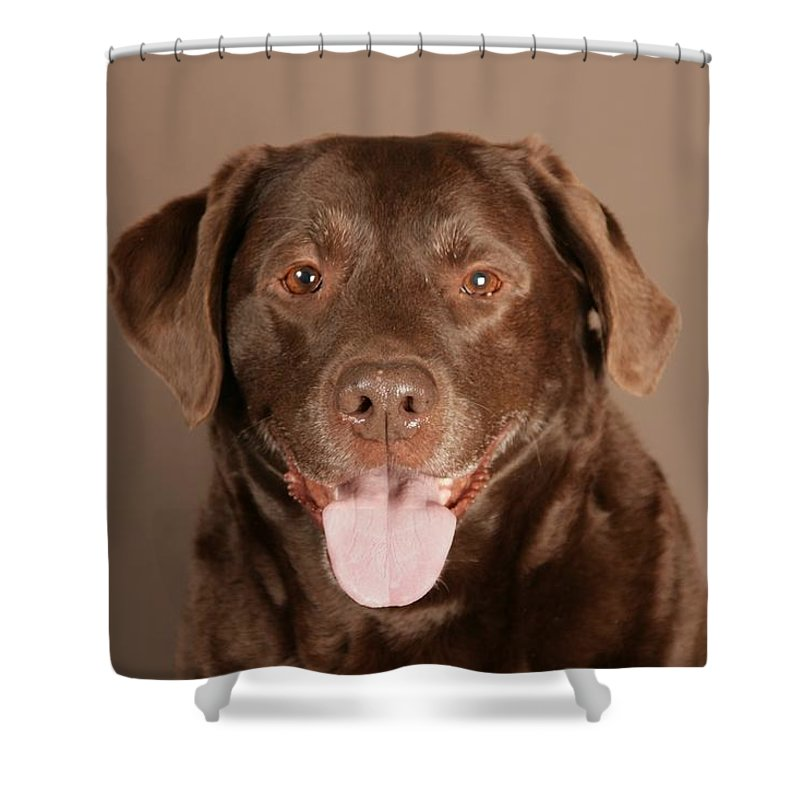 Dog Shower Curtain featuring the photograph Dog by FL collection