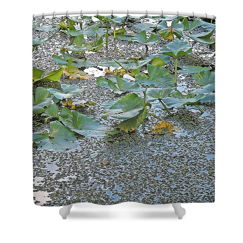 Swamp Shower Curtain featuring the photograph 6 Mile Swamp by Kenneth Albin