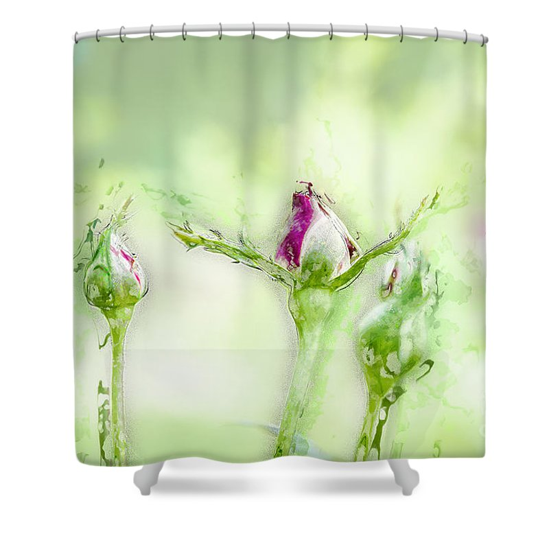 Softness Shower Curtain featuring the photograph Red Rose Bud by Humorous Quotes