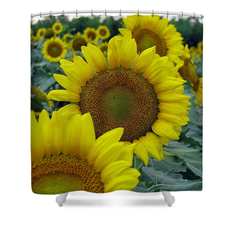 Sunflowers Shower Curtain featuring the photograph Sunflower Series by Amanda Barcon