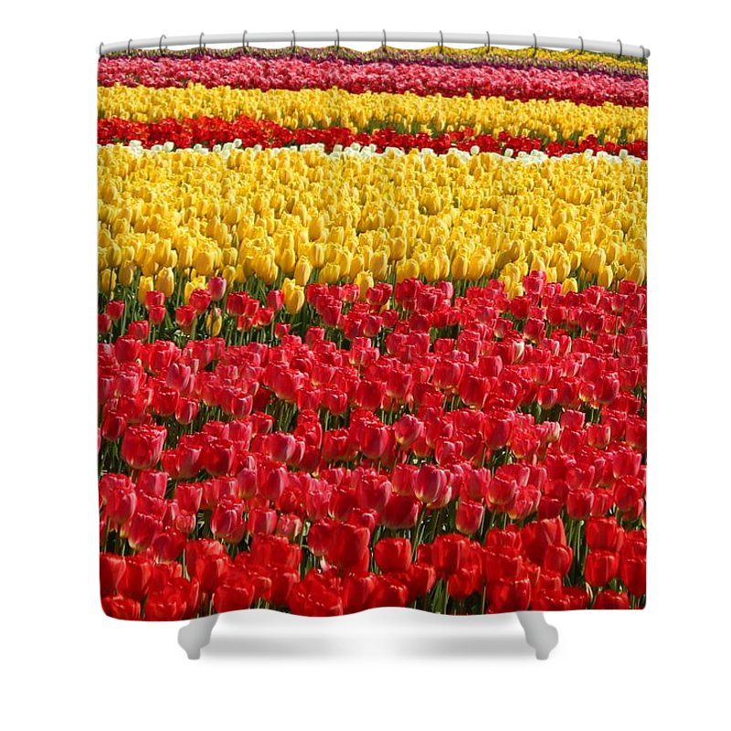 Tulip Shower Curtain featuring the photograph Tulip by Sherri Keene