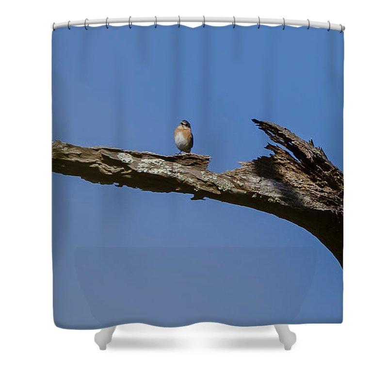 Bird Shower Curtain featuring the photograph Birds by Karen Hart