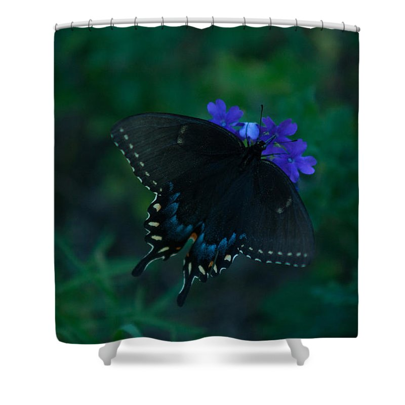 Black Shower Curtain featuring the photograph Black Swallowtail by Craig Hosterman