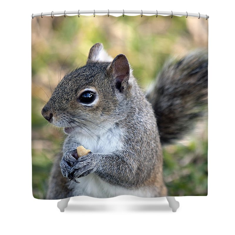 Squirrel Shower Curtain featuring the photograph Eastern Gray Squirrel by Allan Hughes