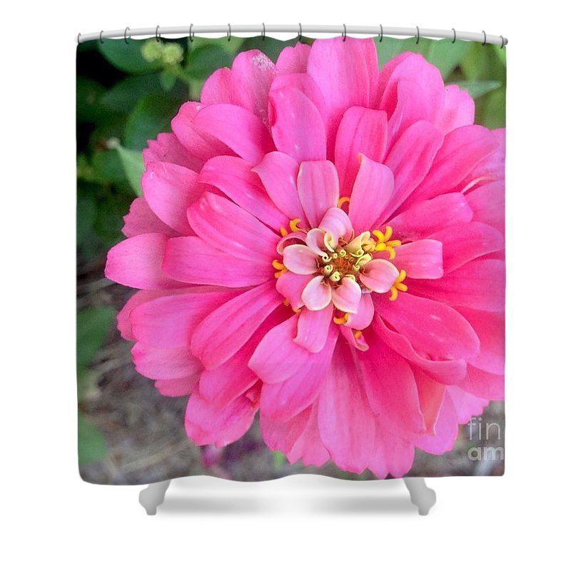 Pink Zinnia Shower Curtain featuring the photograph Pink Zinnia by Virginia Artho