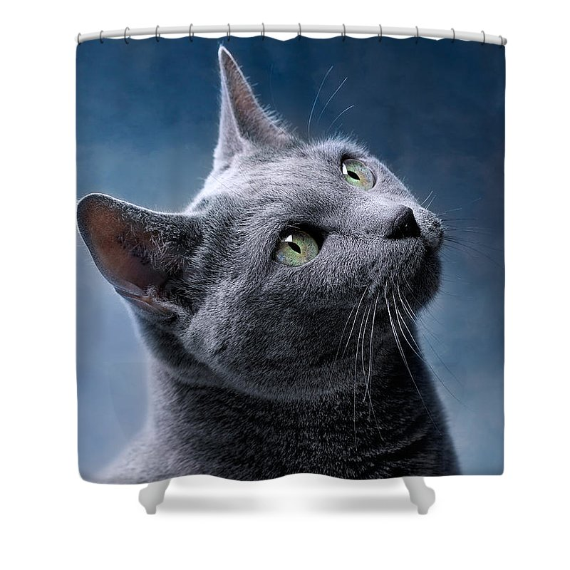 Russian Shower Curtain featuring the photograph Russian Blue Cat by Nailia Schwarz