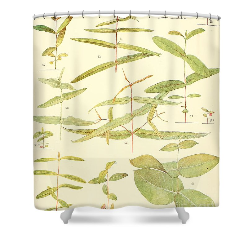 Botanical Shower Curtain featuring the digital art Vintage Botanical Illustration by Alexandr Testudo