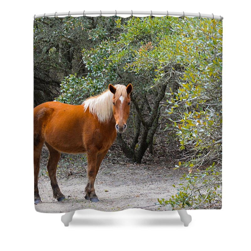Landscape Shower Curtain featuring the photograph Wild Horses by Tom Rostron