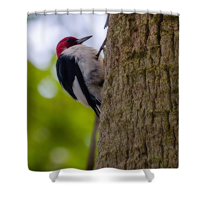 Bird Shower Curtain featuring the photograph Birds by Karen Hart