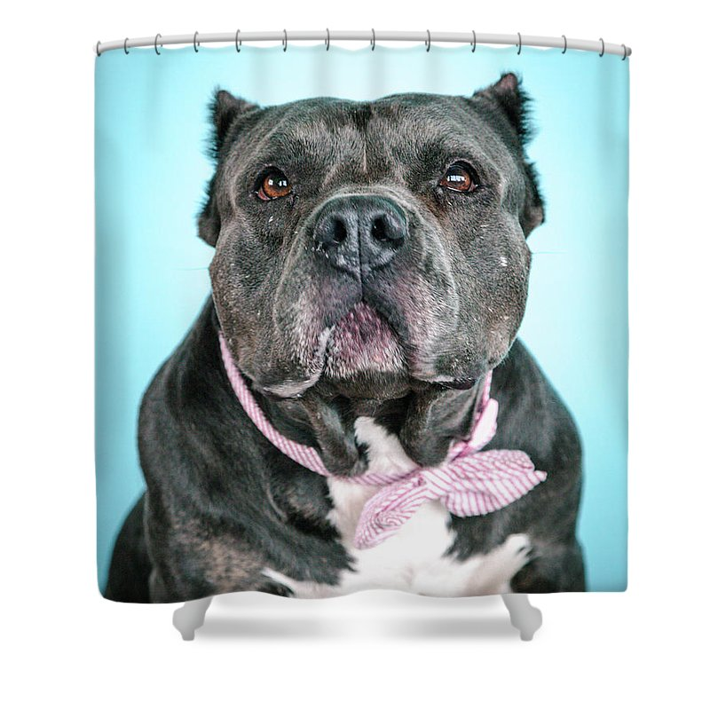 Dog Shower Curtain featuring the photograph Ava by Pit Bull Headshots by Headshots Melrose