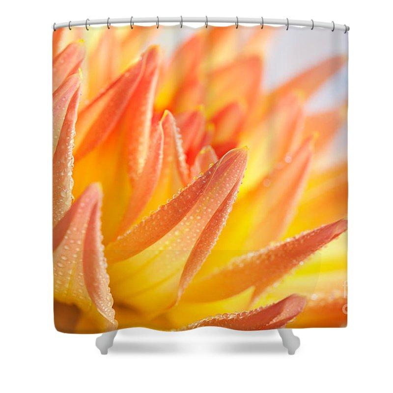 Dahlia Shower Curtain featuring the photograph Dahlia by Nailia Schwarz