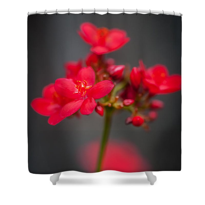 Jatropha Shower Curtain featuring the photograph Jatropha Blossoms Painted by Rich Franco