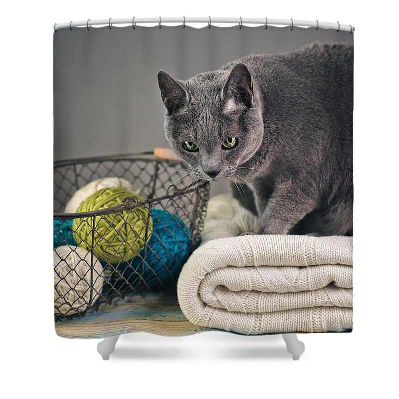 Purebred Shower Curtain featuring the photograph Russian Blue by Nailia Schwarz