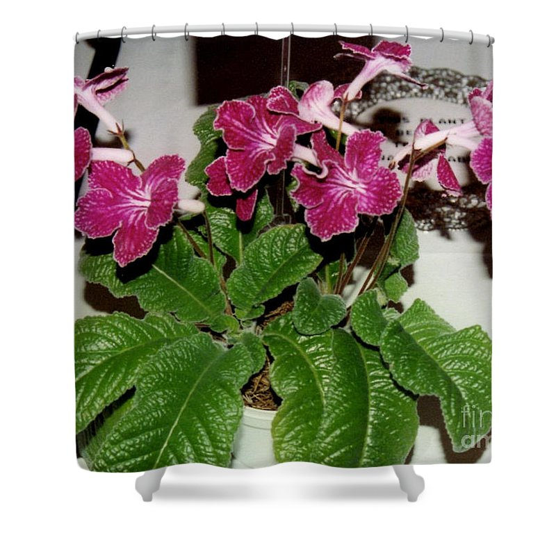 African Violet Prints Shower Curtain featuring the photograph African Violets by Ruth Housley