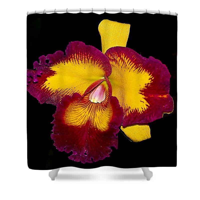 Orquids Shower Curtain featuring the photograph Orquid by Galeria Trompiz