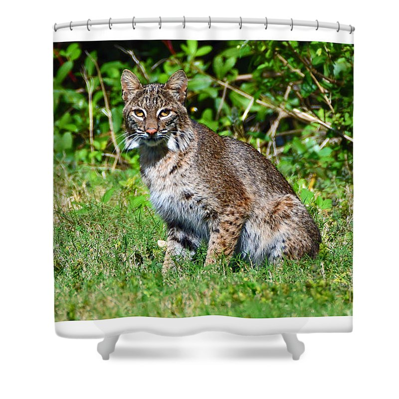 Shower Curtain featuring the photograph 9701 by Don Solari