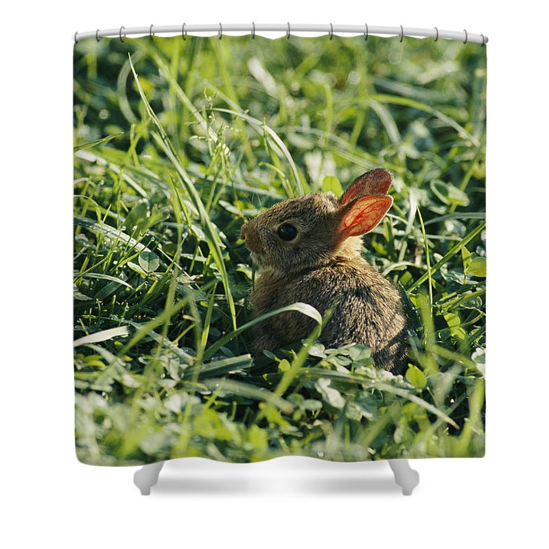 Shenandoah Valley Shower Curtain featuring the photograph A Baby Cottontail Rabbit Sits Among by George F. Mobley