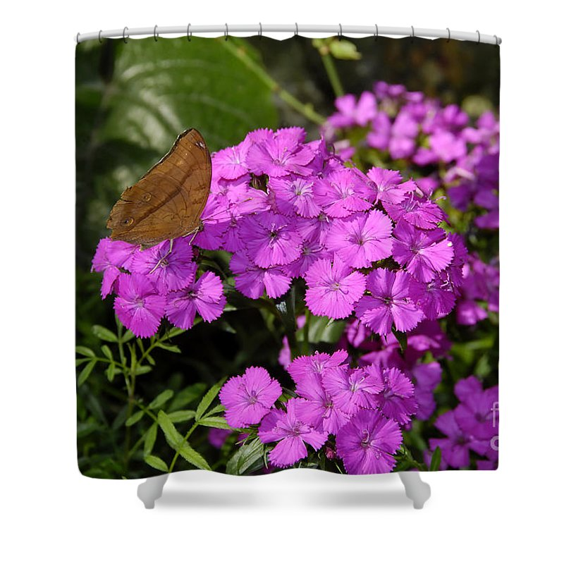 Butterfly Shower Curtain featuring the photograph A Beautiful Landing by David Lee Thompson